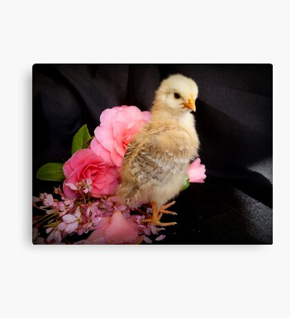 FLOWERS??...Is There Something You Want To Tell Me - Chick - NZ Canvas Print