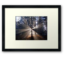 Sunrise in the woods Framed Print