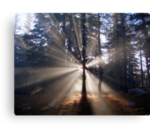 Sunrise in the woods Canvas Print
