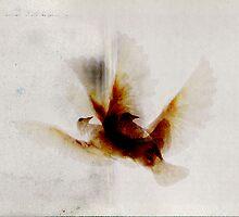eagles by Rui Lourenço