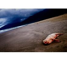 Pig on the beach,Lang co,Vietnam Photographic Print
