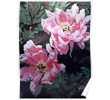 Peony Blooms Poster