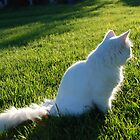 cat in the sun. by Graepear