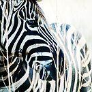 zebra by Kate Wilhelm