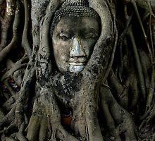 Buddha by Sarah Clibborn