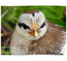 Dad Lives On Through Us! - Silver Duck Wing Chick - NZ Poster