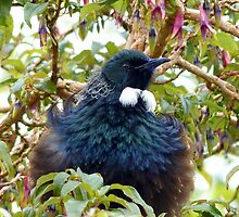 Ever Heard Of Blue Pollen? - Well... Look At My Face...Tui - NZ by AndreaEL