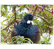 Ever Heard Of Blue Pollen? - Well... Look At My Face...Tui - NZ Poster