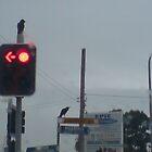 Red light Black Bird by ladypax