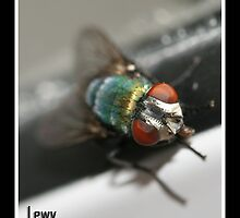 lewy the fly by Tracy King