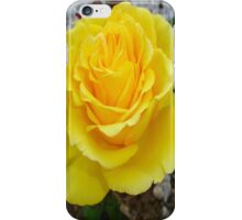 Golden Yellow Rose with Garden Background iPhone Case/Skin