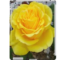 Golden Yellow Rose with Garden Background iPad Case/Skin
