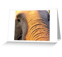 ... gentle eye ... Greeting Card