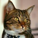 Bucky - Cat Angel by MacLeod
