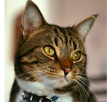 Bucky - Cat Angel Photographic Print