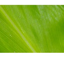 Natures Pinstripes Photographic Print