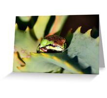 beautiful frog on succulent Greeting Card