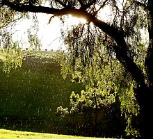 After the Storm # 3 - Audrey Wilkinson Vineyard - Hunter Valley, Australia by anotherdonkeyd