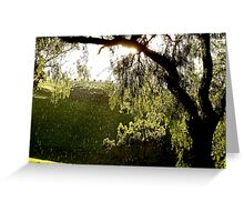 After the Storm # 3 - Audrey Wilkinson Vineyard - Hunter Valley, Australia Greeting Card
