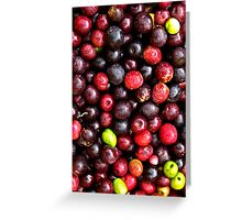 Olive Picking - Millfield Hunter Valley Australia Greeting Card