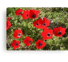 Wild Anemone Flowers In A Spring Field  Canvas Print