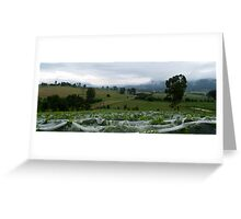 Summerview at Grape Picking Time - Millfield, Hunter Valley Greeting Card