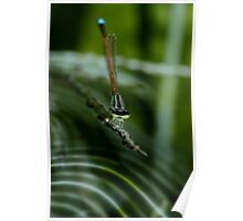 Aurora Blue Damselfly in Green Glade Poster