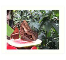 Butterflies  Iguazu Falls - Argentina Art Print