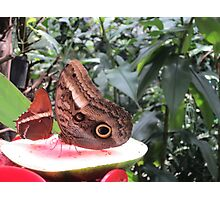 Butterflies  Iguazu Falls - Argentina Photographic Print