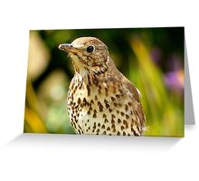 Four Hungry Mouths To Feed... Phew!!! -Song Thrush - NZ Greeting Card