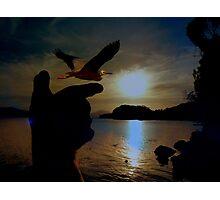 New Zealand's Endangered Birds - Book Cover - NZ Photographic Print