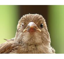 Wink...Wink... Sparrow - NZ Photographic Print