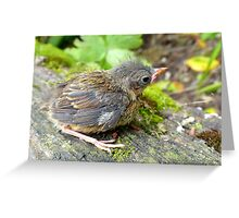 I'm A Beautiful Little Ugly.. Dunnock Hedge Sparrow - NZ Greeting Card