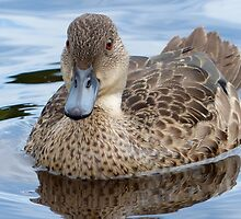 Did You Say... Smile!!... - Grey Teal Duck - NZ by AndreaEL