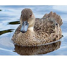 Did You Say... Smile!!... - Grey Teal Duck - NZ Photographic Print