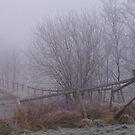Into the mist by kathywaldron