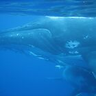 Whale and Calf2 by bessie420