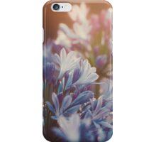 Agapanthus Liliaceae II  iPhone Case/Skin