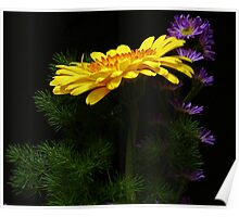 Yellow Gerber Daisy and Purple Daisies Poster