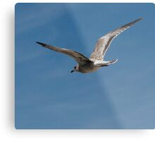 Learning to Fly Like Dad Metal Print