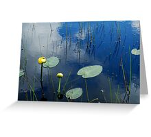 Lily Pads in Pond Greeting Card