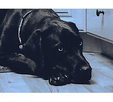 Mastador Photographic Print