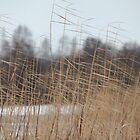 reeds cold winter wind by mrivserg