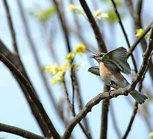 Frenzied Bluebird Female by Bonnie T.  Barry