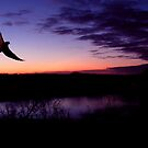 Dove In Flight At Sunset by Kenneth Krolikowski