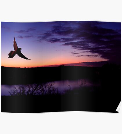 Dove In Flight At Sunset Poster