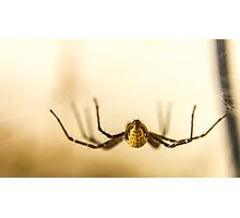 The best side of a donk... I mean a spider... Photographic Print
