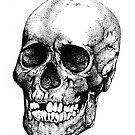 Skull by Sarah Moore