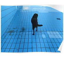 DOG IN THE POOL  Poster