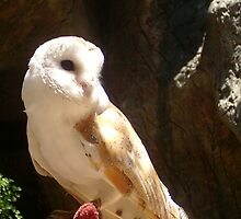 Barn owl by Sophie89
